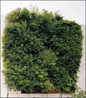 樹木対応型壁面緑化システム   竹中工務店