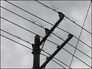 枝のある電柱