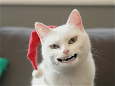 Yodeling Cat