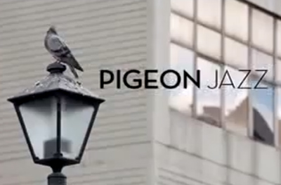 Pigeon jazz in the city