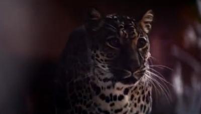 Whiskas Big Cat Little Cat