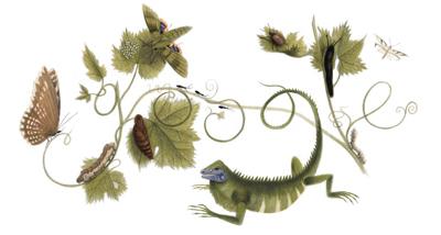 Google 画家のマリア・ジビーラ・メーリアン生誕366周年で、精密な動植物画のロゴに!