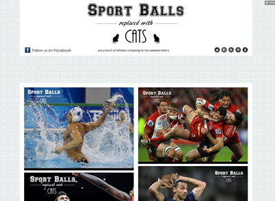Sport Balls Replaced With Cats