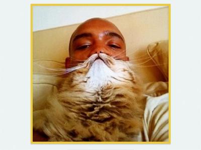 Cat-beard