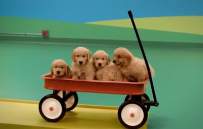 Dog Goldberg Machine by Beneful