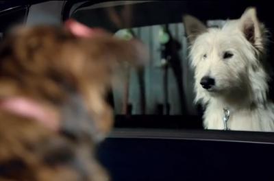 Citroën C3 Dog Romance