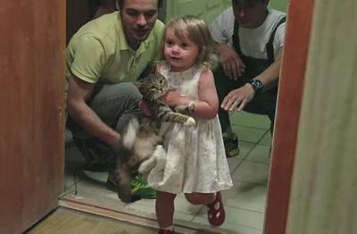 Сервис доставки котов на новоселье