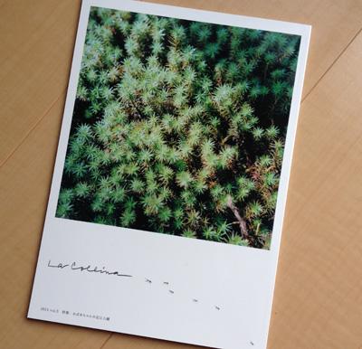 たねやとクラブハリエによる無料冊子「La Collina(ラ・コリーナ)」2015 vol.5