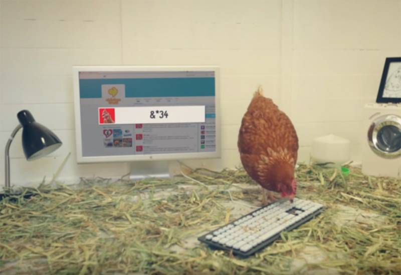 Chicken Treat - The first tweeting Chicken