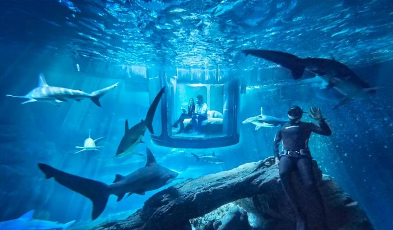 L'aquarium de Paris avec 35 requins