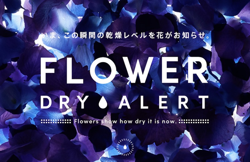 FLOWER DRY ALERT|Flowers show how dry it is now.