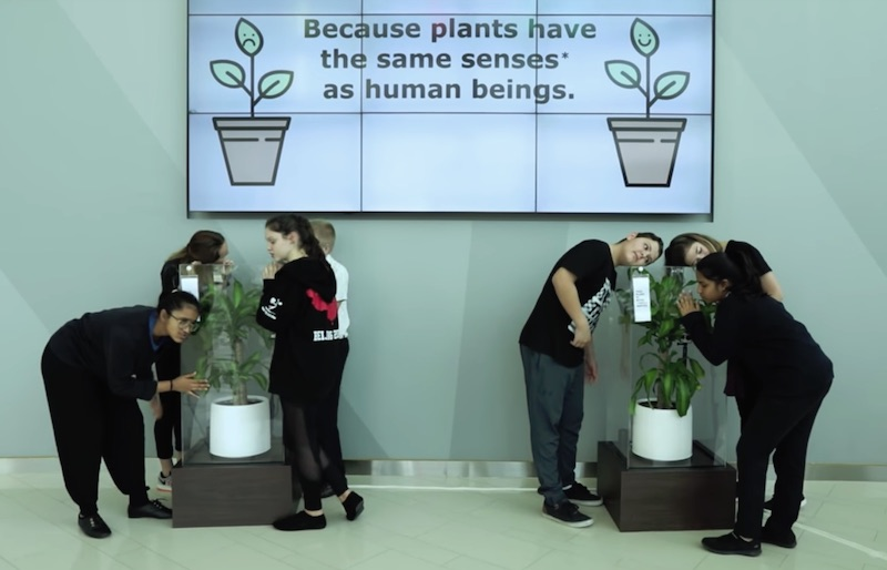 Bully A Plant Say No To Bullying