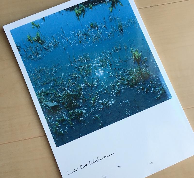 たねやとクラブハリエによる無料冊子「La Collina(ラ・コリーナ)」2018 vol.12