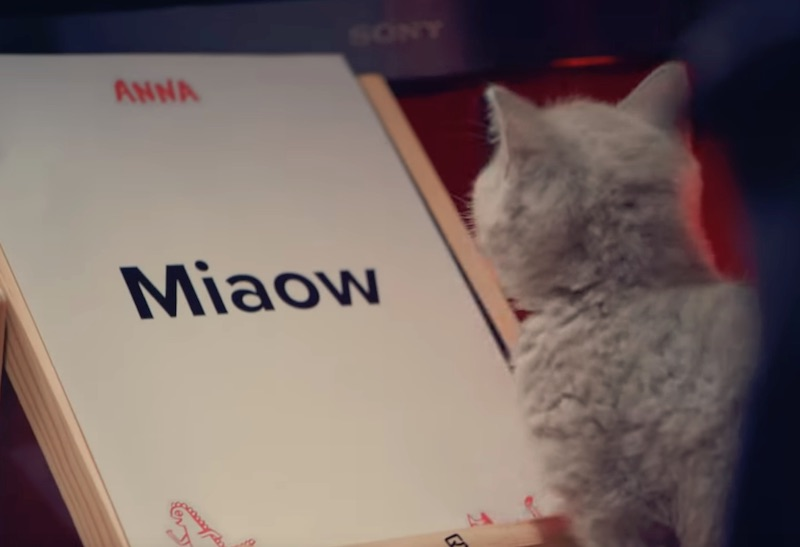 The world's first miaowing debit card | ANNA Money