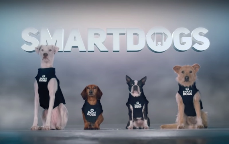 Introducing Smartdogs Cut Down - GEICO Insurance