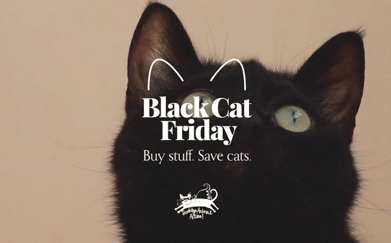 Black Cat Friday