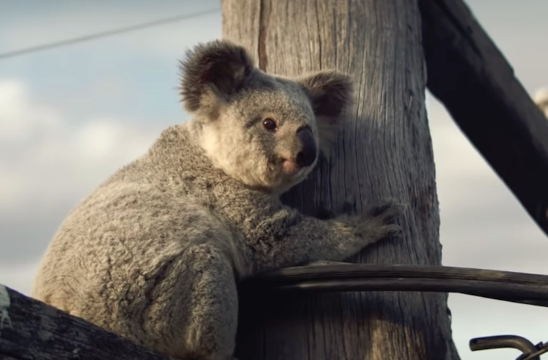 NRMA Insurance - Every home is worth protecting