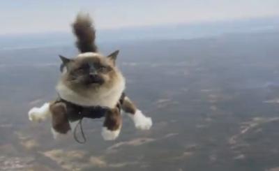 Evas katt