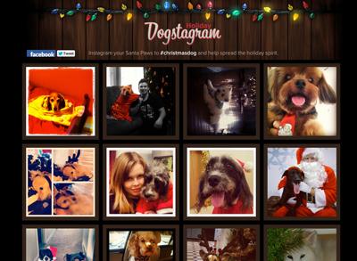Holiday Dogstagram