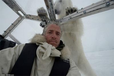 Close encounter with a polar bear