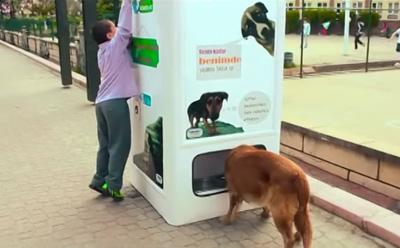 Sokak Hayvanları İçin Üretilmiş Geri Dönüşüm Kutusu Pugedon