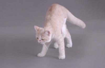 Kotex's Cat video ad