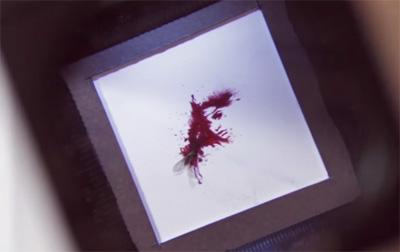 Glorix — Blood Portraits