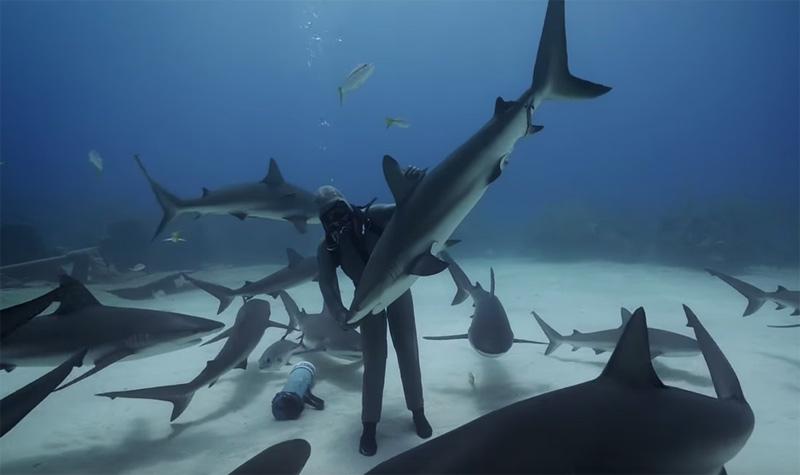 Touch Made Powerful Shark Dancer
