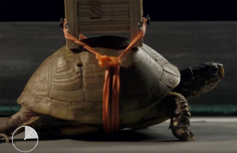 World's Slowest Rube Goldberg