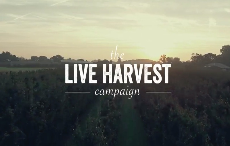 Delhaize - LIVE HARVEST