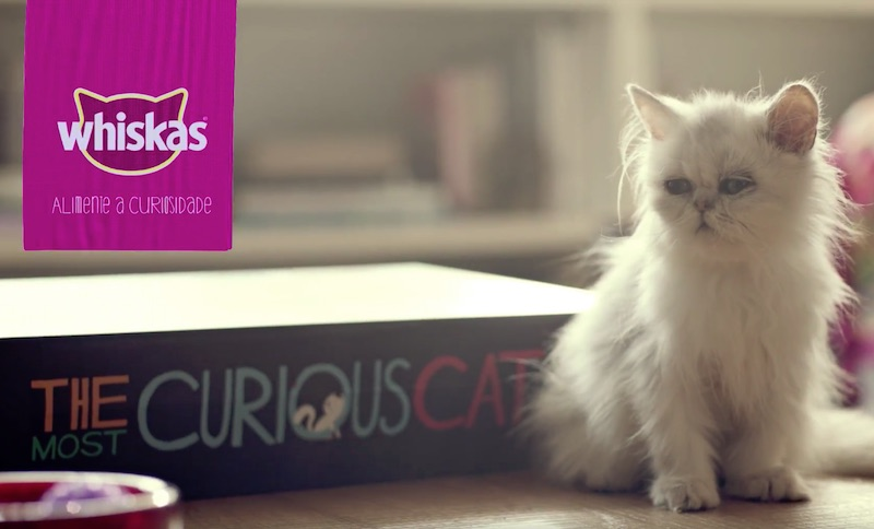 WHISKAS® | The Curious Cat Book