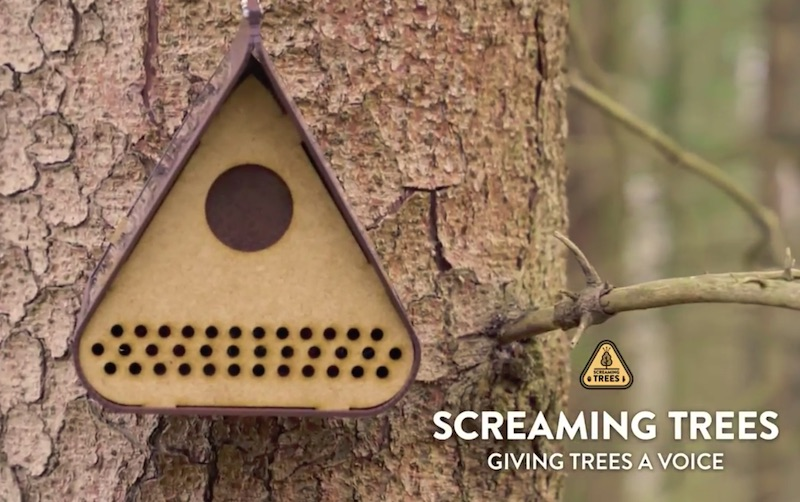 Screaming Trees - Giving Trees a Voice
