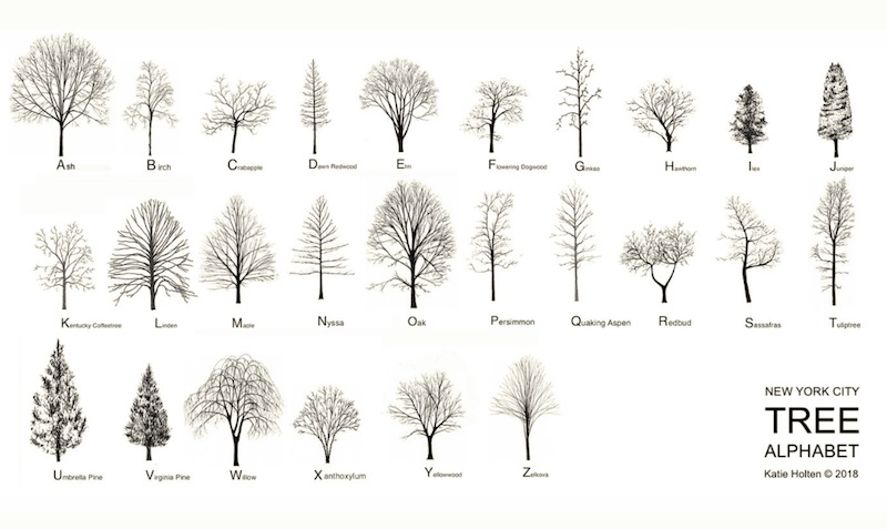 New York City Tree Alphabet