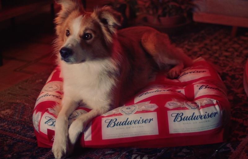 BUDWEISER | NBA | PETS