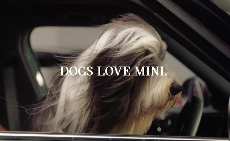 MINI x DOGS TRUST